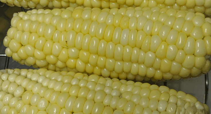 Corn on the Cob in the Instant Pot