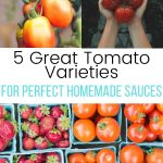 collage of different tomato varieties