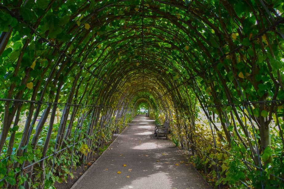 Archway with greenery growing on it.