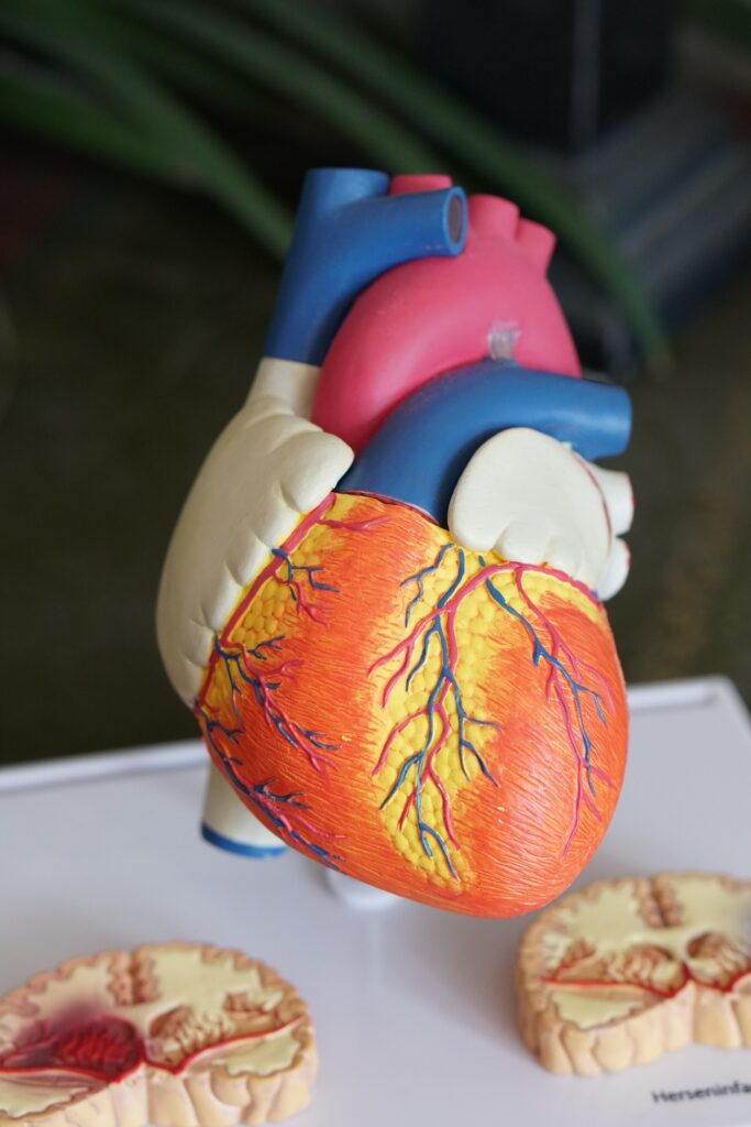 medical conditions that can increase your chances of getting covid 19. Picture of plastic organs.